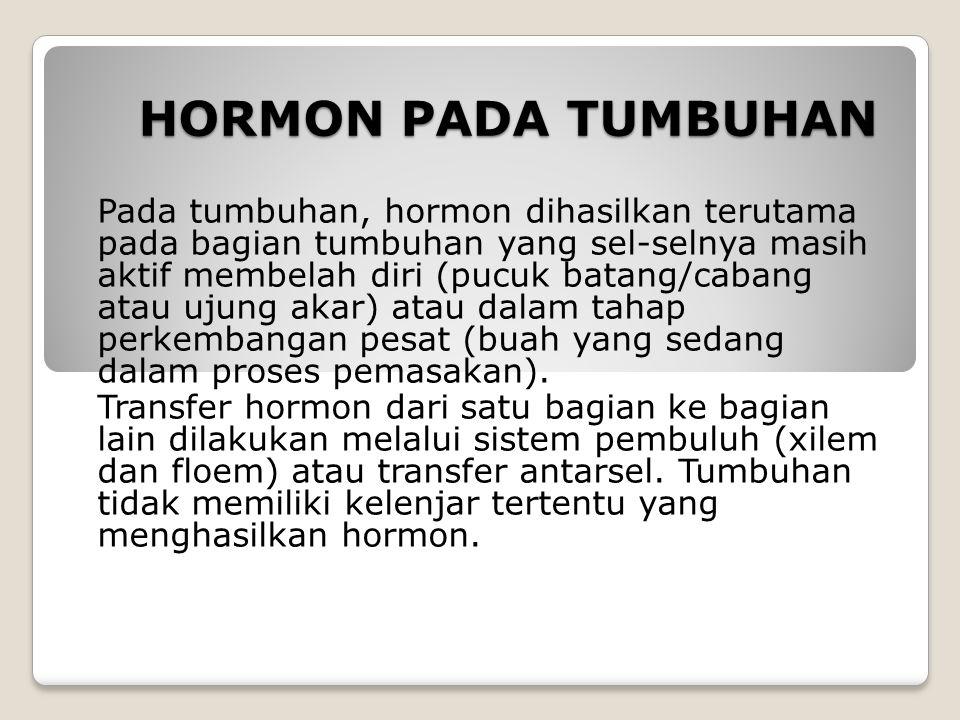 HORMON PADA TUMBUHAN Pada tumbuhan, hormon dihasilkan terutama pada bagian tumbuhan yang sel-selnya masih aktif membelah diri (pucuk batang/cabang ata