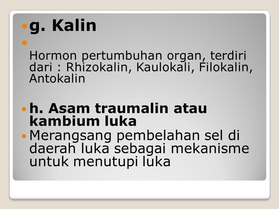 g. Kalin Hormon pertumbuhan organ, terdiri dari : Rhizokalin, Kaulokali, Filokalin, Antokalin h. Asam traumalin atau kambium luka Merangsang pembelaha