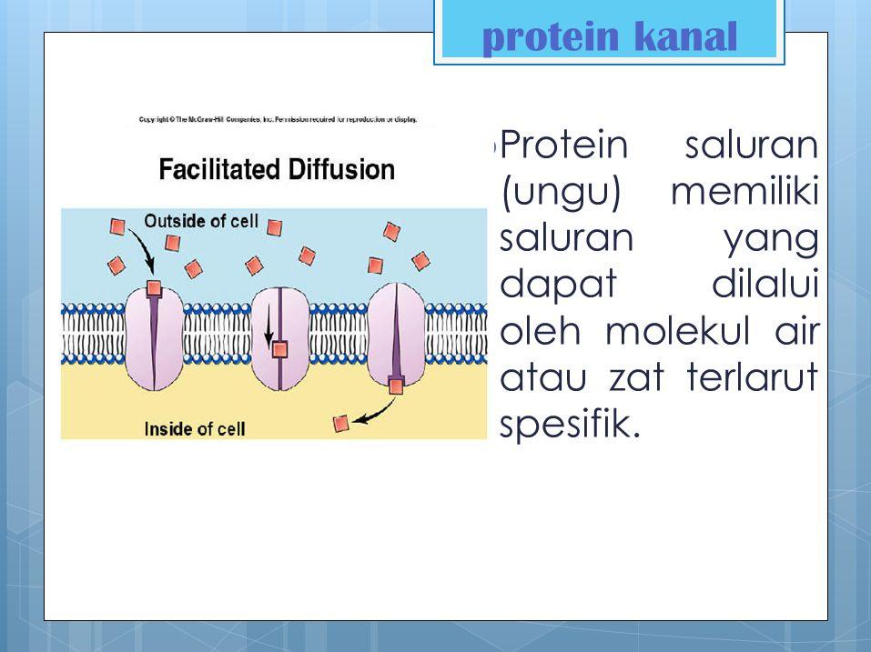 Protein Carier protein pembawa berubah-ubah bentuk, sehingga menggerakkan zat terlarut menyeberangi membran saat perubahan bentuk.