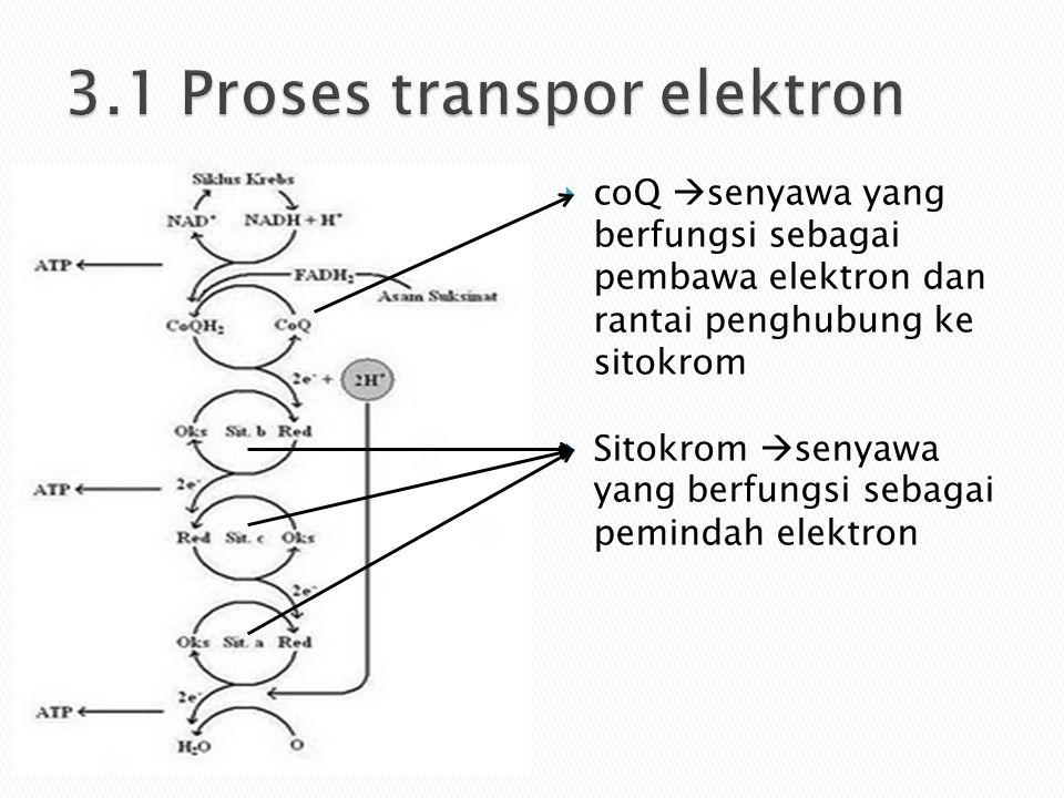  coQ  senyawa yang berfungsi sebagai pembawa elektron dan rantai penghubung ke sitokrom  Sitokrom  senyawa yang berfungsi sebagai pemindah elektro