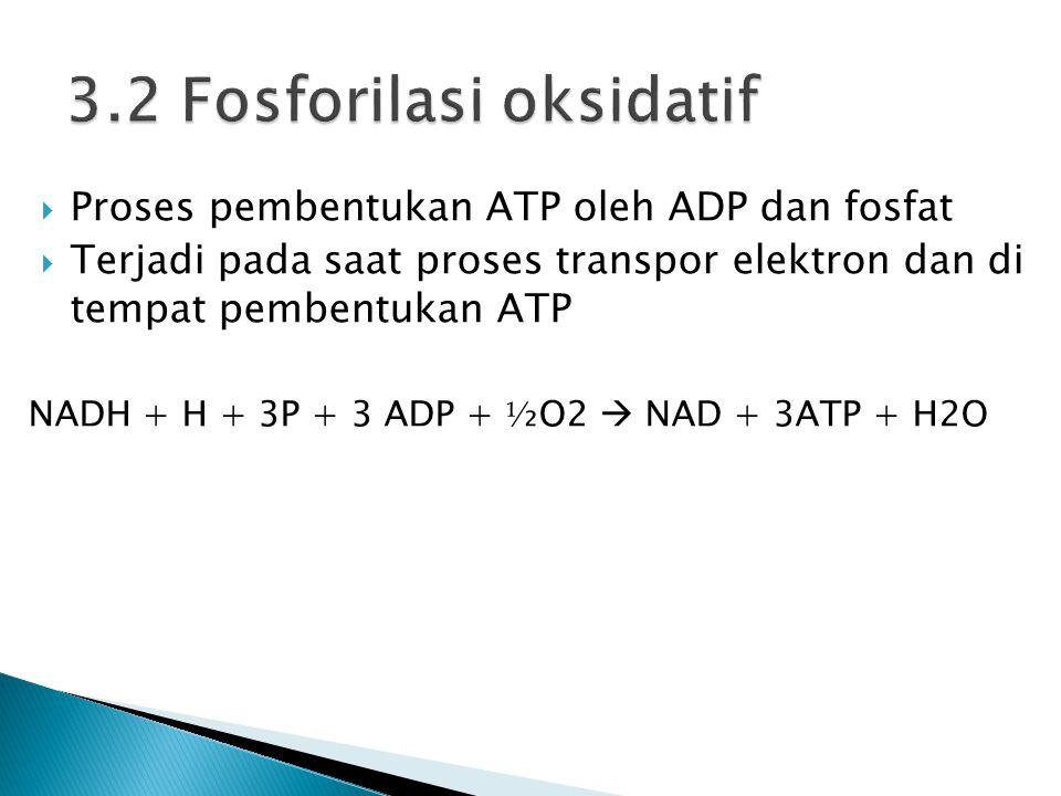  Proses pembentukan ATP oleh ADP dan fosfat  Terjadi pada saat proses transpor elektron dan di tempat pembentukan ATP NADH + H + 3P + 3 ADP + ⅟ ₂O2