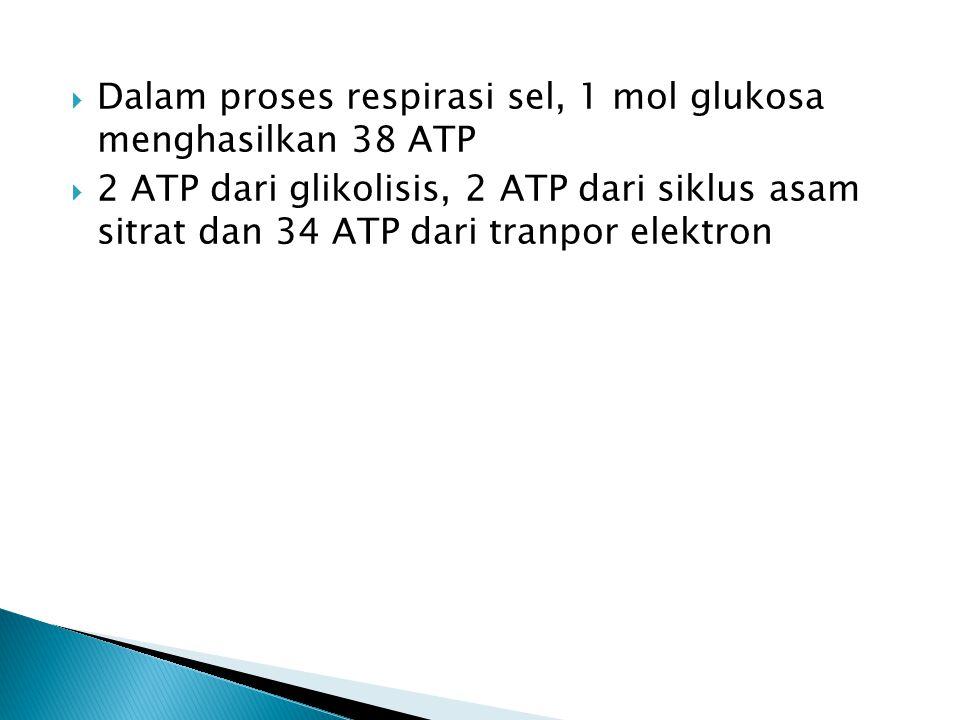  Dalam proses respirasi sel, 1 mol glukosa menghasilkan 38 ATP  2 ATP dari glikolisis, 2 ATP dari siklus asam sitrat dan 34 ATP dari tranpor elektro