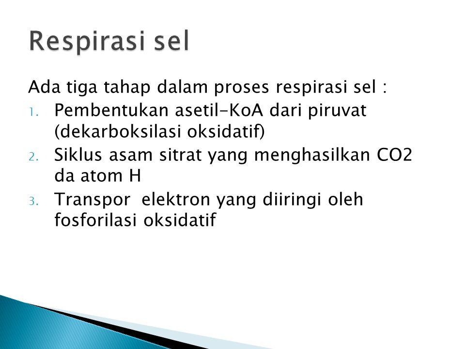  Hasil produk dari proses glikolisis yaitu asam piruvat yang bereaksi dengan molekul NAD dan Koa akan mengalami dehidrogenasi  Dibantu oleh enzim kompleks piruvat dehidrogenase, yang terdiri dari 3 enzim yaitu piruvat dehidrogenase,dihidrolipoil transasetilase dan dihidrolipoil dehidrogenase  Menghasilkan asetil-KoA, NADH dan CO2  Reaksinya : csaa