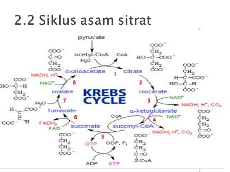  Tahap akhir pada respirasi sel  Terjadi pada membran mitokondria sebelah dalam (matriks)  Proses oksidasi terminal dan pemindahan elektron untuk menghasilkan ATP