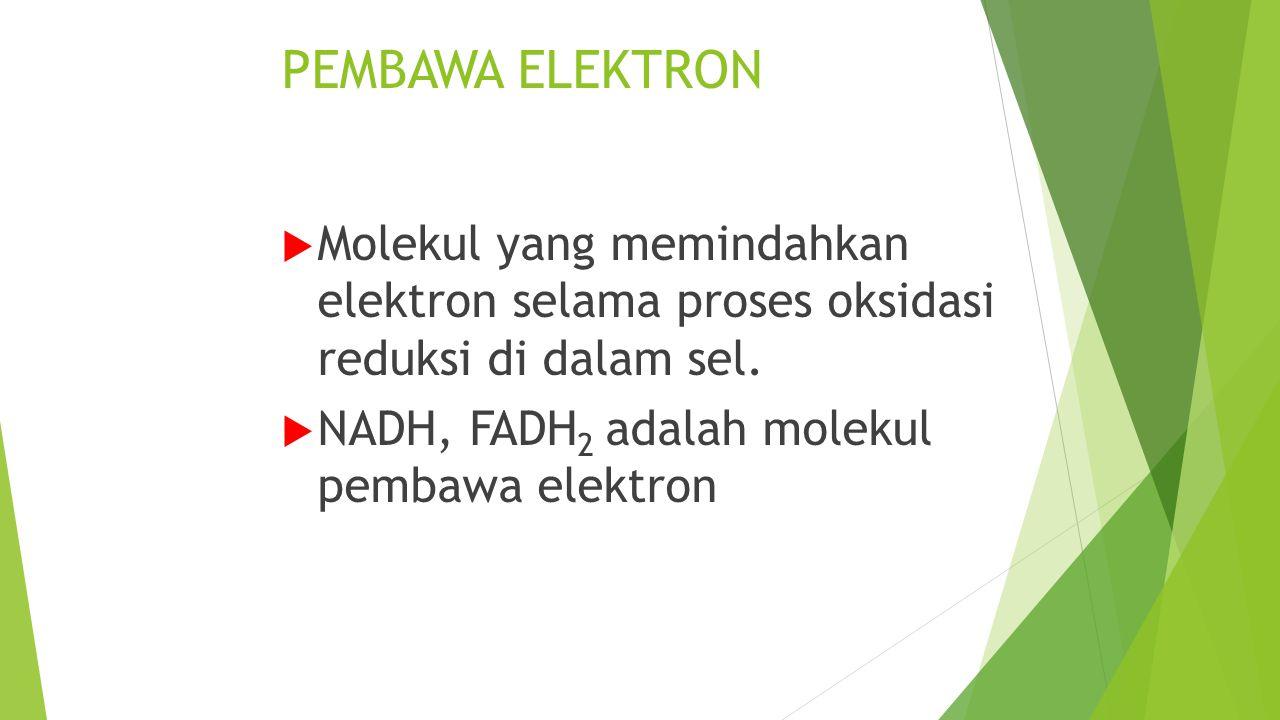 PEMBAWA ELEKTRON  Molekul yang memindahkan elektron selama proses oksidasi reduksi di dalam sel.  NADH, FADH 2 adalah molekul pembawa elektron