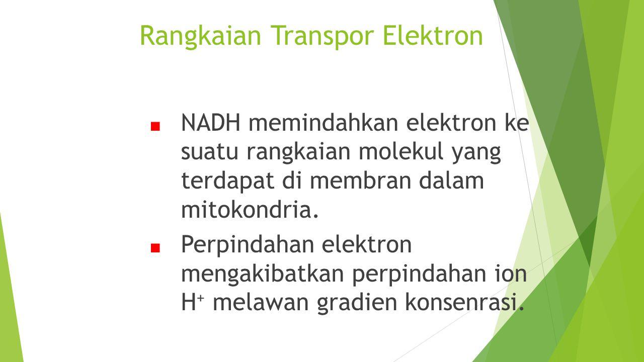 Rangkaian Transpor Elektron ■ NADH memindahkan elektron ke suatu rangkaian molekul yang terdapat di membran dalam mitokondria. ■ Perpindahan elektron