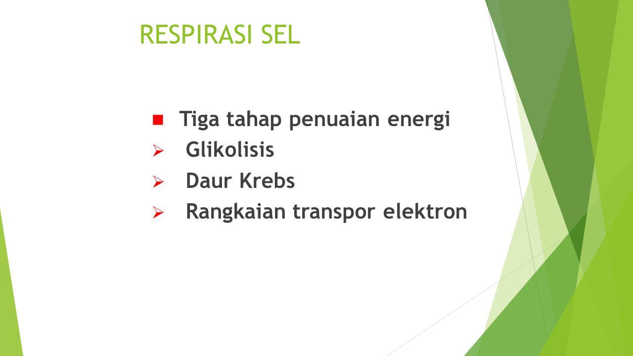 RESPIRASI SEL Tiga tahap penuaian energi  Glikolisis  Daur Krebs  Rangkaian transpor elektron