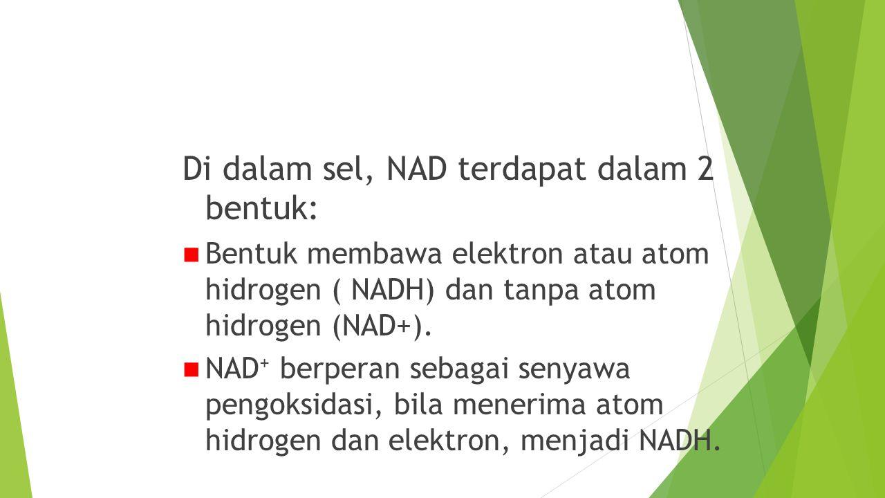 NAD (Nikotinamida Dinukleotida) Di dalam sel, NAD terdapat dalam 2 bentuk: Bentuk membawa elektron atau atom hidrogen ( NADH) dan tanpa atom hidrogen