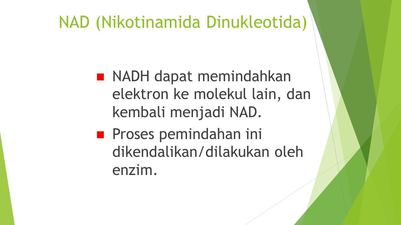 NAD (Nikotinamida Dinukleotida) NADH dapat memindahkan elektron ke molekul lain, dan kembali menjadi NAD. Proses pemindahan ini dikendalikan/dilakukan