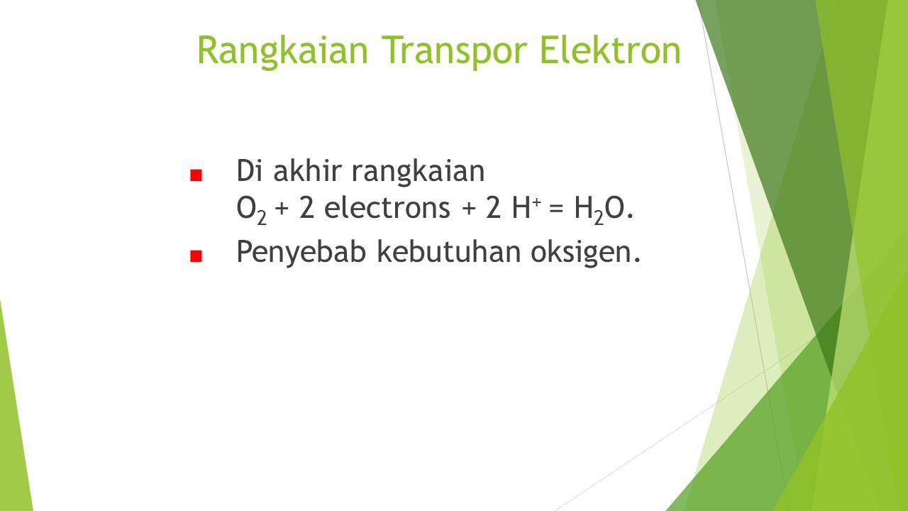 Rangkaian Transpor Elektron ■ Di akhir rangkaian O 2 + 2 electrons + 2 H + = H 2 O. ■ Penyebab kebutuhan oksigen.
