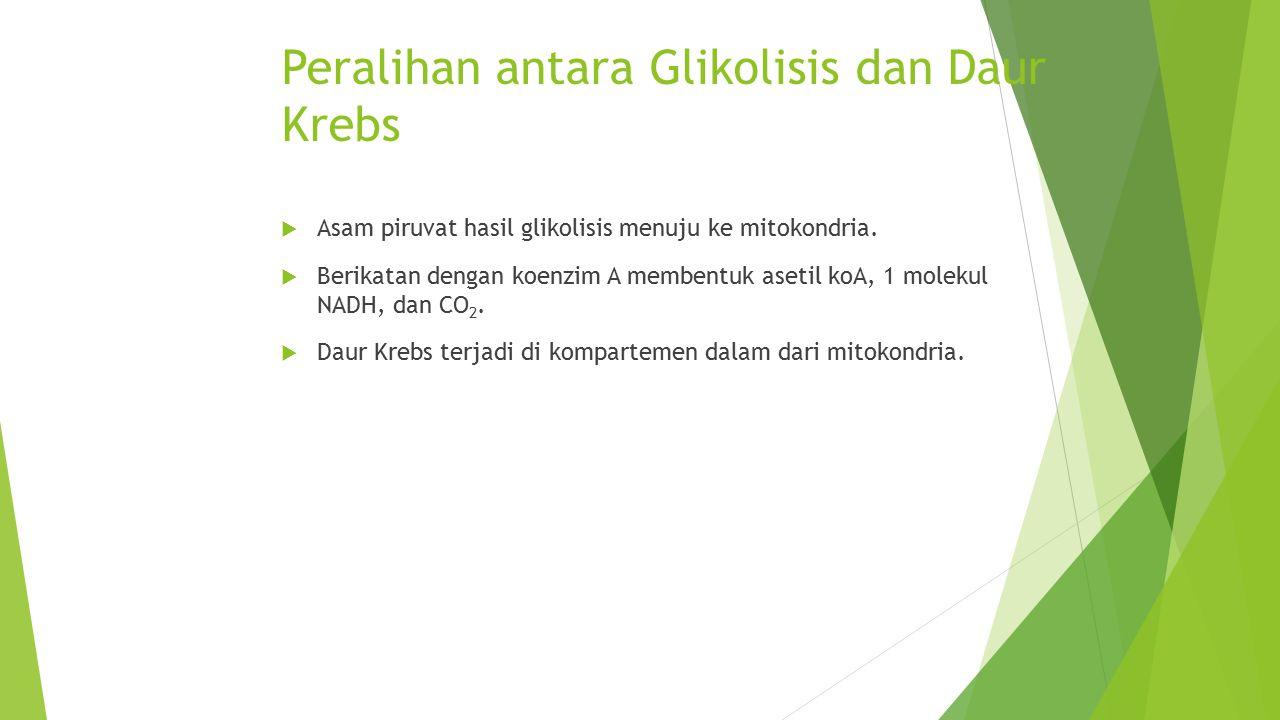Peralihan antara Glikolisis dan Daur Krebs  Asam piruvat hasil glikolisis menuju ke mitokondria.  Berikatan dengan koenzim A membentuk asetil koA, 1