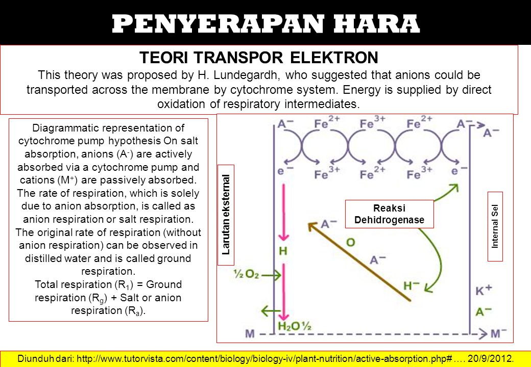 PENYERAPAN HARA TEORI TRANSPOR ELEKTRON This theory was proposed by H.