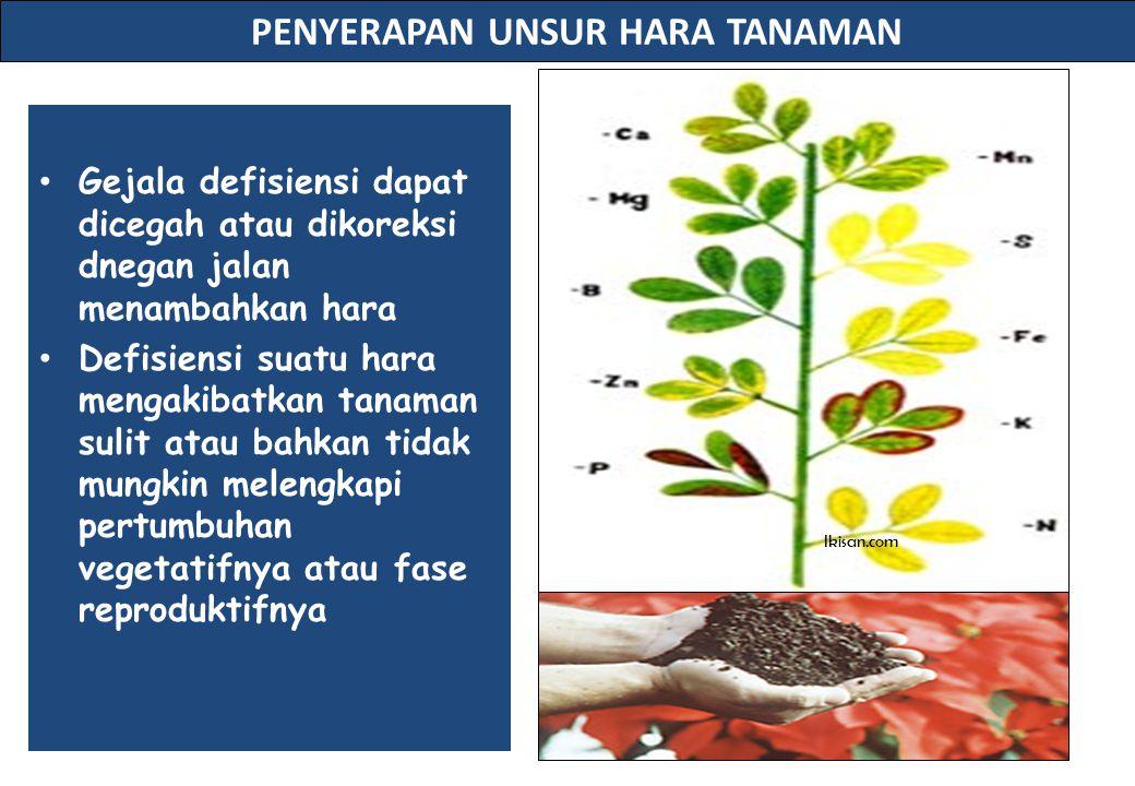 PENYERAPAN UNSUR HARA TANAMAN Gejala defisiensi dapat dicegah atau dikoreksi dnegan jalan menambahkan hara Defisiensi suatu hara mengakibatkan tanaman