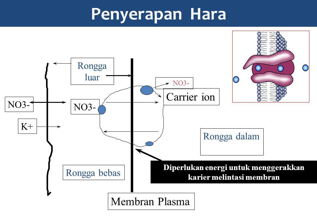 Penyerapan Hara Carrier ion Membran Plasma Rongga dalam Rongga luar NO3- K+ Rongga bebas Diperlukan energi untuk menggerakkan karier melintasi membran