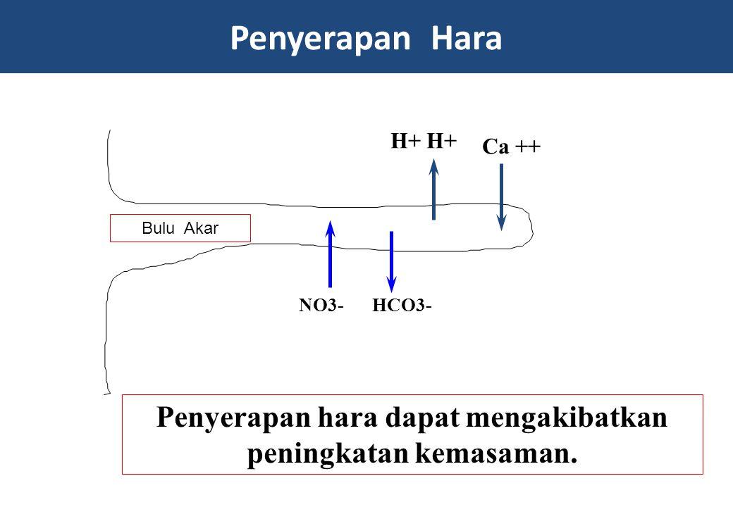 Penyerapan Hara Root Hair NO3-HCO3- Ca ++ H+ Penyerapan hara dapat mengakibatkan peningkatan kemasaman. Bulu Akar