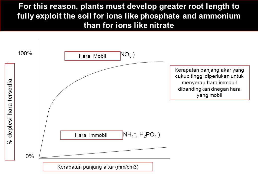 For this reason, plants must develop greater root length to fully exploit the soil for ions like phosphate and ammonium than for ions like nitrate A m