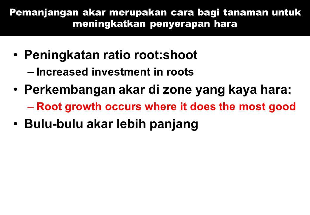 Peningkatan ratio root:shoot –Increased investment in roots Perkembangan akar di zone yang kaya hara: –Root growth occurs where it does the most good