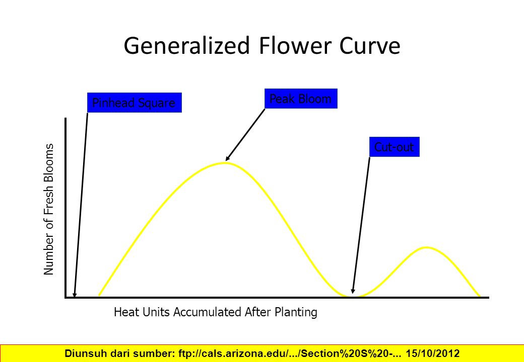 Generalized Flower Curve Heat Units Accumulated After Planting Number of Fresh Blooms Pinhead Square Peak Bloom Cut-out Diunsuh dari sumber: ftp://cal