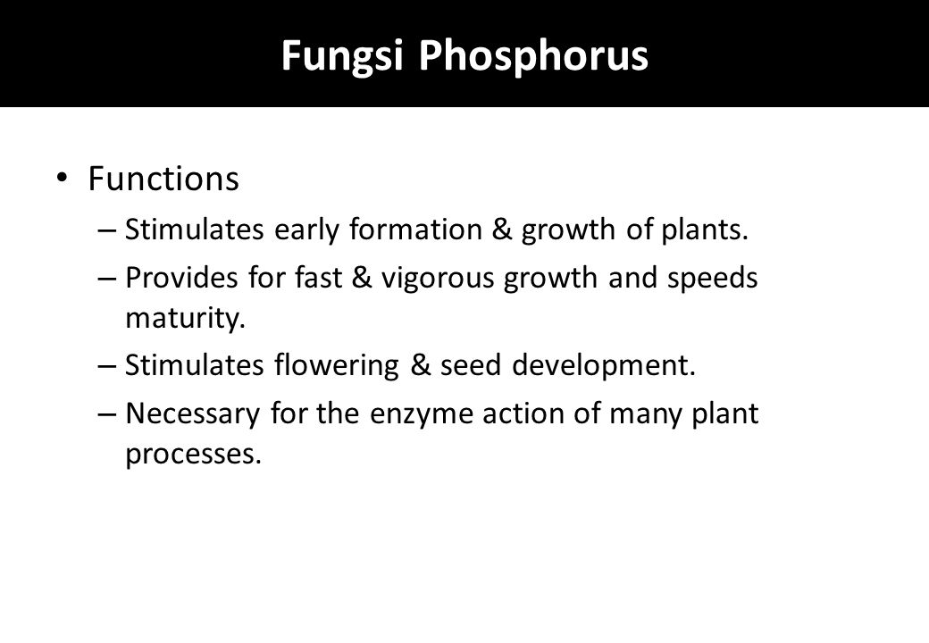Fungsi Phosphorus Functions – Stimulates early formation & growth of plants.