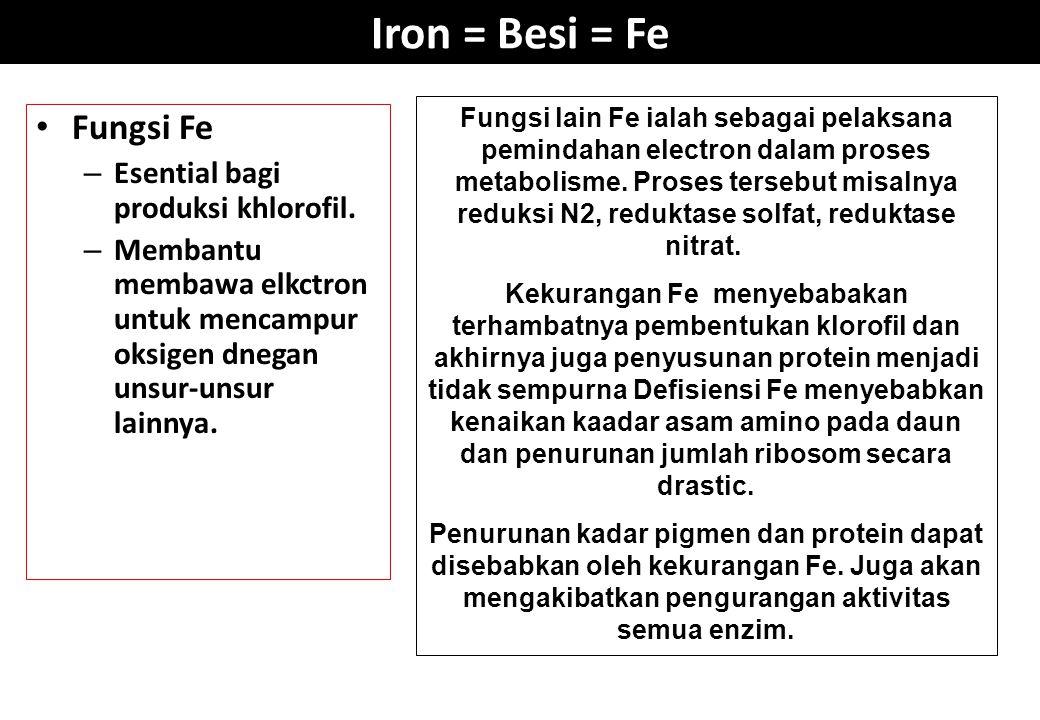 Iron = Besi = Fe Fungsi Fe – Esential bagi produksi khlorofil. – Membantu membawa elkctron untuk mencampur oksigen dnegan unsur-unsur lainnya. Fungsi