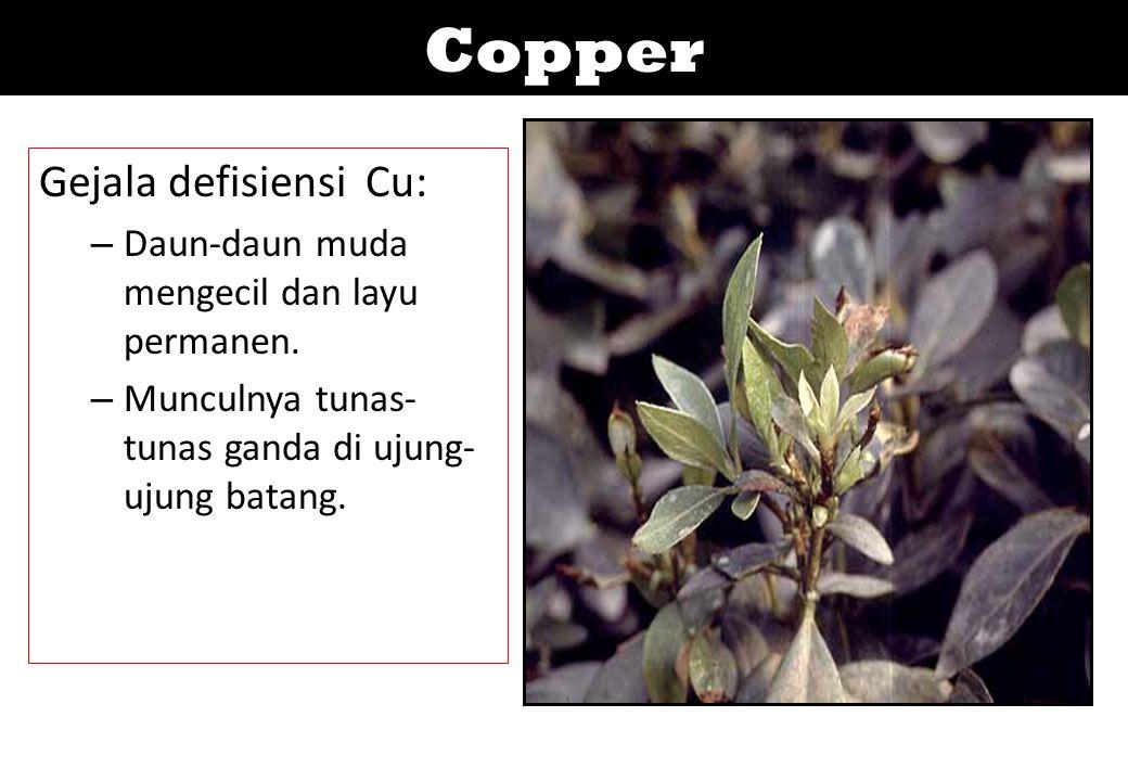 Copper Gejala defisiensi Cu: – Daun-daun muda mengecil dan layu permanen. – Munculnya tunas- tunas ganda di ujung- ujung batang.