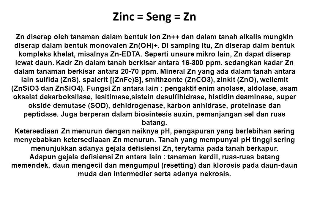 Zinc = Seng = Zn Zn diserap oleh tanaman dalam bentuk ion Zn++ dan dalam tanah alkalis mungkin diserap dalam bentuk monovalen Zn(OH)+. Di samping itu,