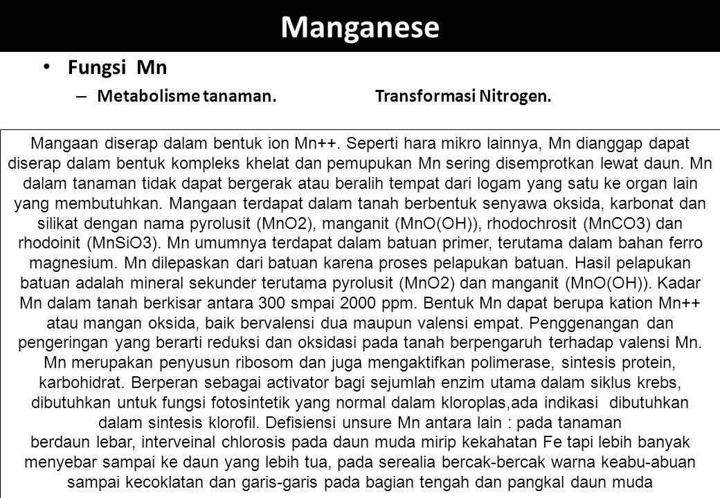 Manganese Fungsi Mn – Metabolisme tanaman.Transformasi Nitrogen. Mangaan diserap dalam bentuk ion Mn++. Seperti hara mikro lainnya, Mn dianggap dapat