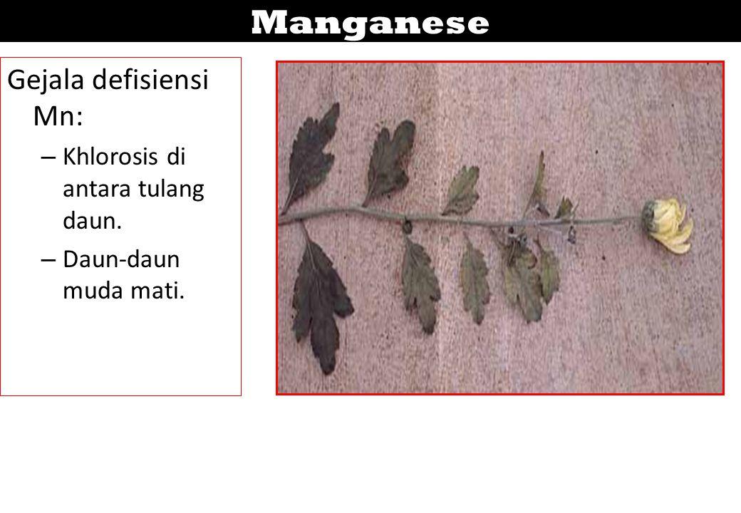 Manganese Gejala defisiensi Mn: – Khlorosis di antara tulang daun. – Daun-daun muda mati.