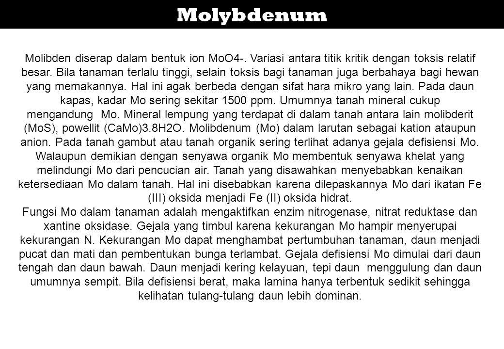 Molybdenum Molibden diserap dalam bentuk ion MoO4-. Variasi antara titik kritik dengan toksis relatif besar. Bila tanaman terlalu tinggi, selain toksi