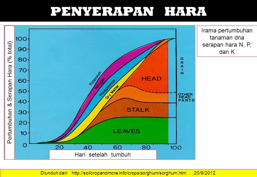 PENYERAPAN HARA Irama pertumbuhan tanaman dna serapan hara N, P, dan K Diunduh dari: http://soilcropandmore.info/crops/sorghum/sorghum.htm …. 20/9/201