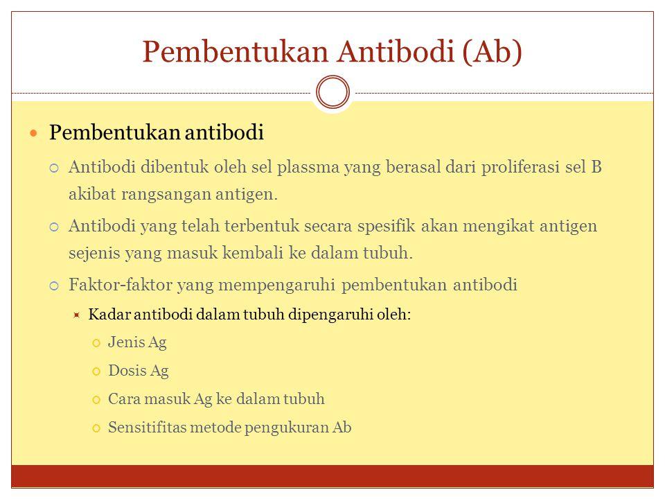 Pembentukan Antibodi (Ab) Pembentukan antibodi  Antibodi dibentuk oleh sel plassma yang berasal dari proliferasi sel B akibat rangsangan antigen.