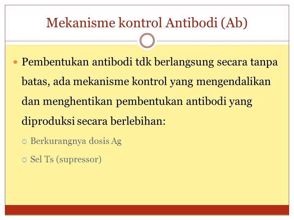 Mekanisme kontrol Antibodi (Ab) Pembentukan antibodi tdk berlangsung secara tanpa batas, ada mekanisme kontrol yang mengendalikan dan menghentikan pembentukan antibodi yang diproduksi secara berlebihan:  Berkurangnya dosis Ag  Sel Ts (supressor)