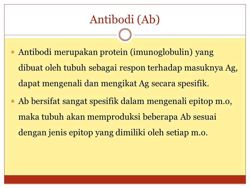 Struktur Antibodi (Ab) Struktur Antibodi Molekul imunoglobulin dapat dipecah oleh enzim papain menjadi 3 fragmen:  2 fragmen disebut Fab (fragment antigen binfing) berfungsi mengikat antigen, variabilitas sesuai dengan variabilitas antigen yang merangsangnya  1 fragmen disebut Fc (fragment crystalable), merupakan fragmen yang konstan dan tdk dapat mengikat antigen.
