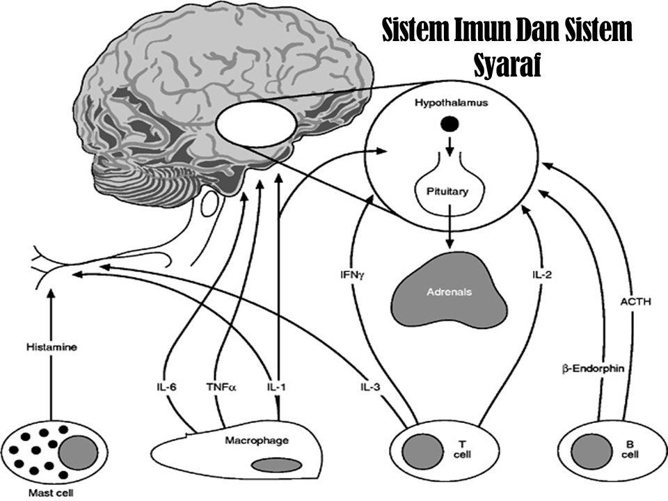 Penutup  Namun yang perlu diperhatikan bahwa kejadian sehat-sakit dipengaruhi oleh 3 faktor :  Mind  Body  Spirit  Perlu juga diwaspadai adalah pada generasi yang akan datang.