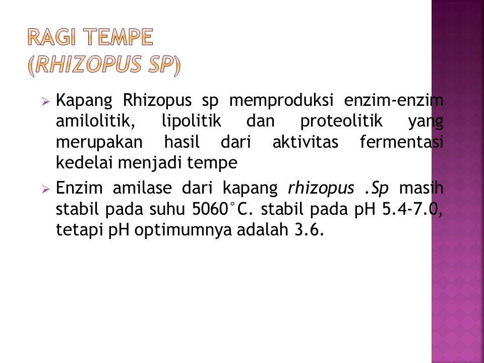  Kapang Rhizopus sp memproduksi enzim-enzim amilolitik, lipolitik dan proteolitik yang merupakan hasil dari aktivitas fermentasi kedelai menjadi tempe  Enzim amilase dari kapang rhizopus.Sp masih stabil pada suhu 5060°C.