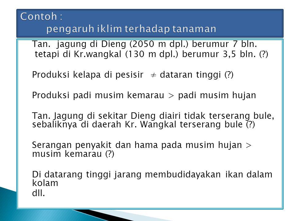 Tan. jagung di Dieng (2050 m dpl.) berumur 7 bln. tetapi di Kr.wangkal (130 m dpl.) berumur 3,5 bln. (?) Produksi kelapa di pesisir ≠ dataran tinggi (