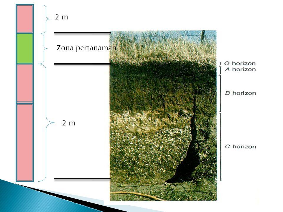 2 m Zona pertanaman