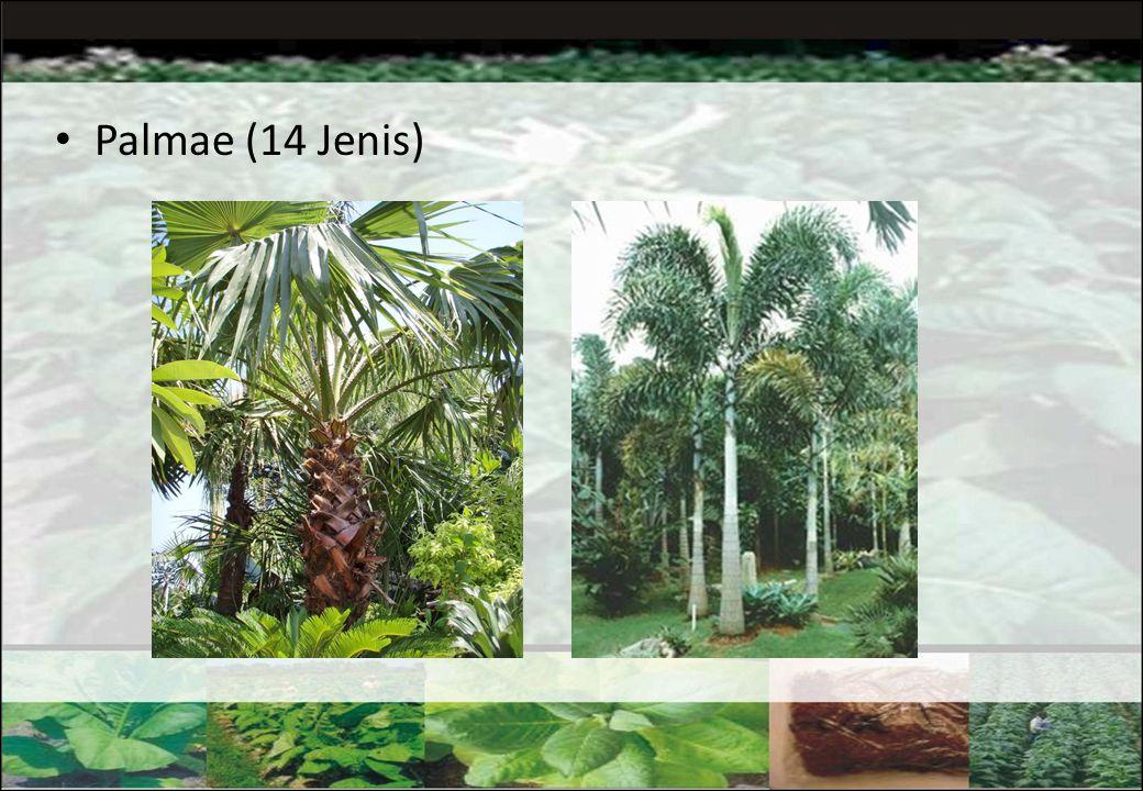  Palm 447 spesies diantaranya 225 spesies endemik.  Paku-pakuan 4000 spesies  Rotan 332 spesies  Bambu 1200 spesies  Tanaman obat 1260 spesies (4