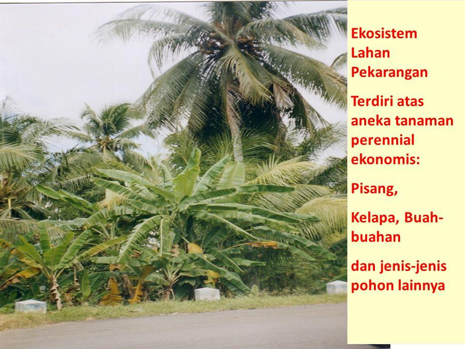 1.Rantai Pemangsa Rantai pemangsa landasan utamanya adalah tumbuhan hijau sebagai produsen.