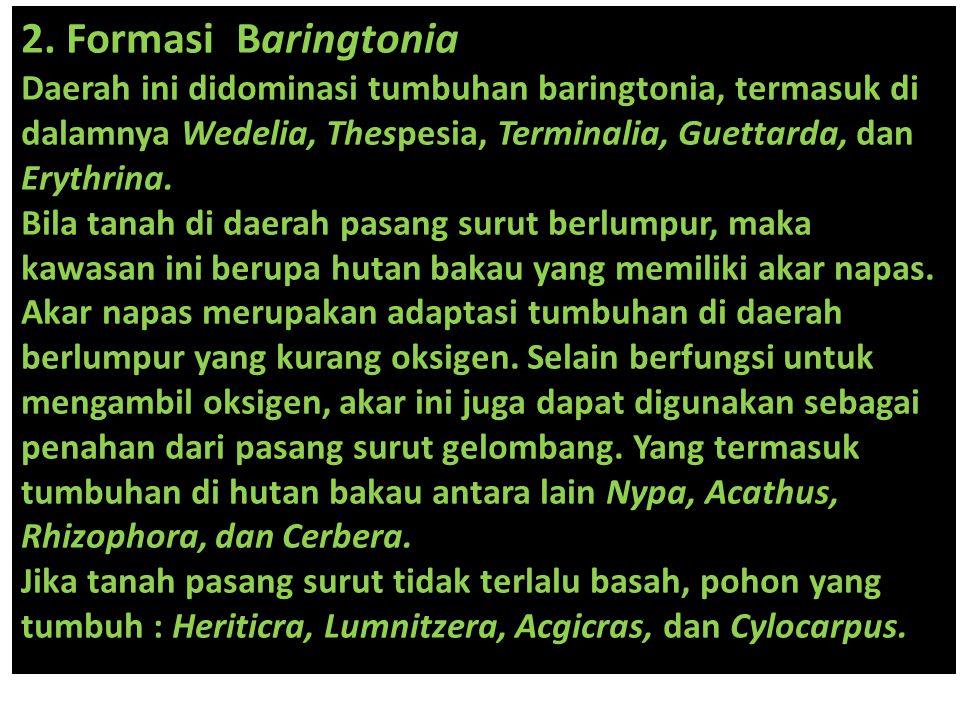 2. Formasi Baringtonia Daerah ini didominasi tumbuhan baringtonia, termasuk di dalamnya Wedelia, Thespesia, Terminalia, Guettarda, dan Erythrina. Bila