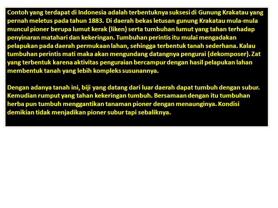 Contoh yang terdapat di Indonesia adalah terbentuknya suksesi di Gunung Krakatau yang pernah meletus pada tahun 1883. Di daerah bekas letusan gunung K
