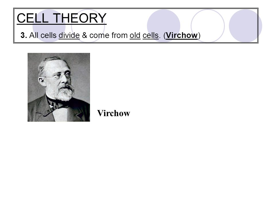 CELL THEORY 3. All cells divide & come from old cells. (Virchow) Virchow