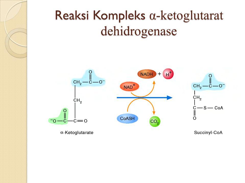 Reaksi Kompleks α-ketoglutarat dehidrogenase