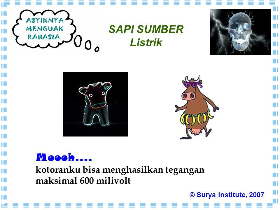 SAPI SUMBER Listrik Moooh.... kotoranku bisa menghasilkan tegangan maksimal 600 milivolt