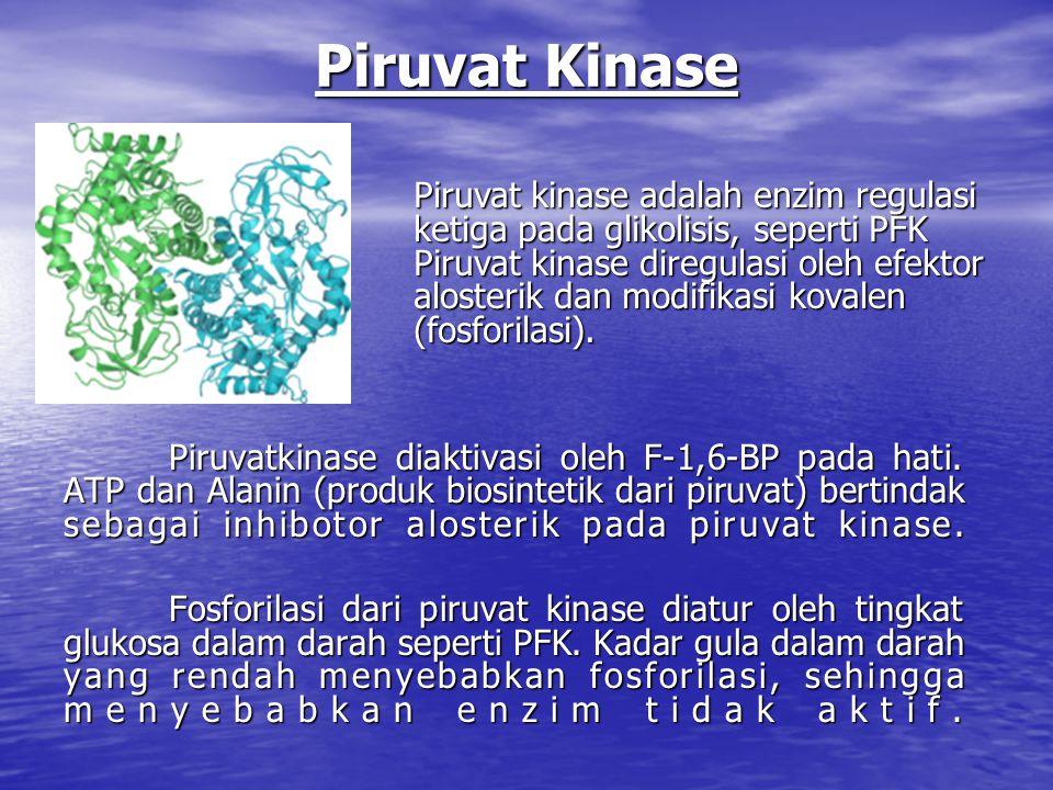 Piruvat Kinase Piruvatkinase diaktivasi oleh F-1,6-BP pada hati.