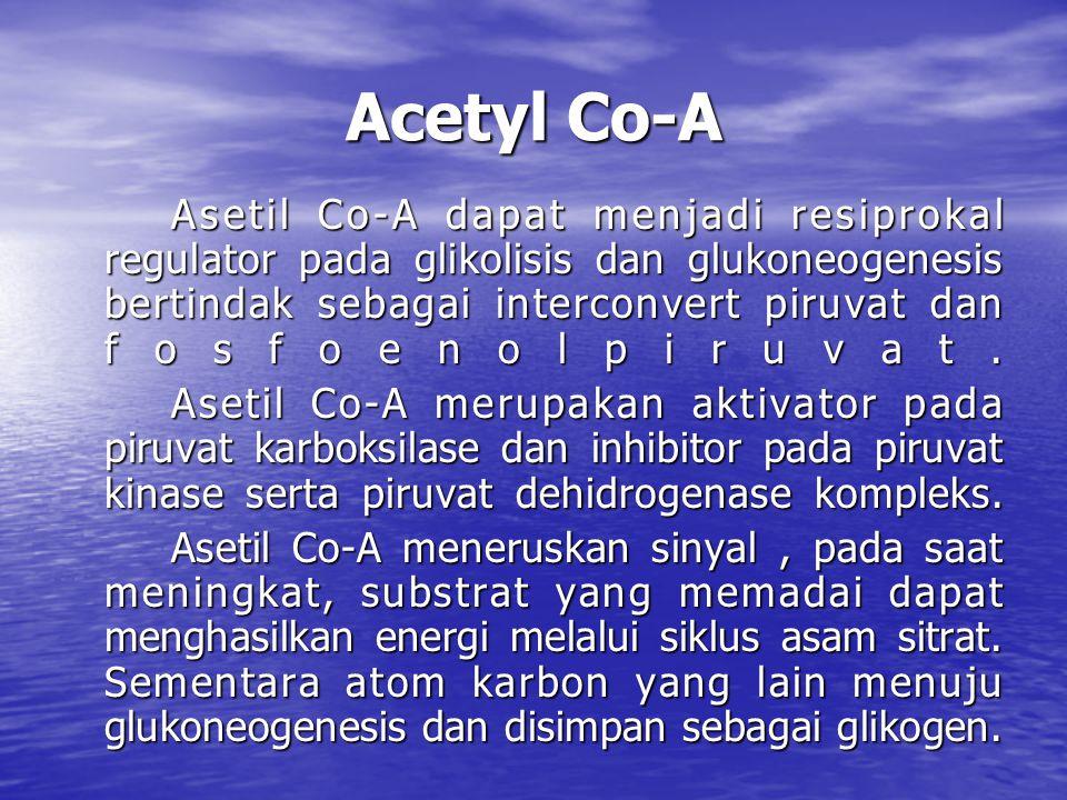 Acetyl Co-A Asetil Co-A dapat menjadi resiprokal regulator pada glikolisis dan glukoneogenesis bertindak sebagai interconvert piruvat dan fosfoenolpiruvat.