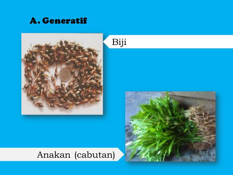 B. Vegetatif stek pucuk, sambung pucuk dan kultur jaringan.
