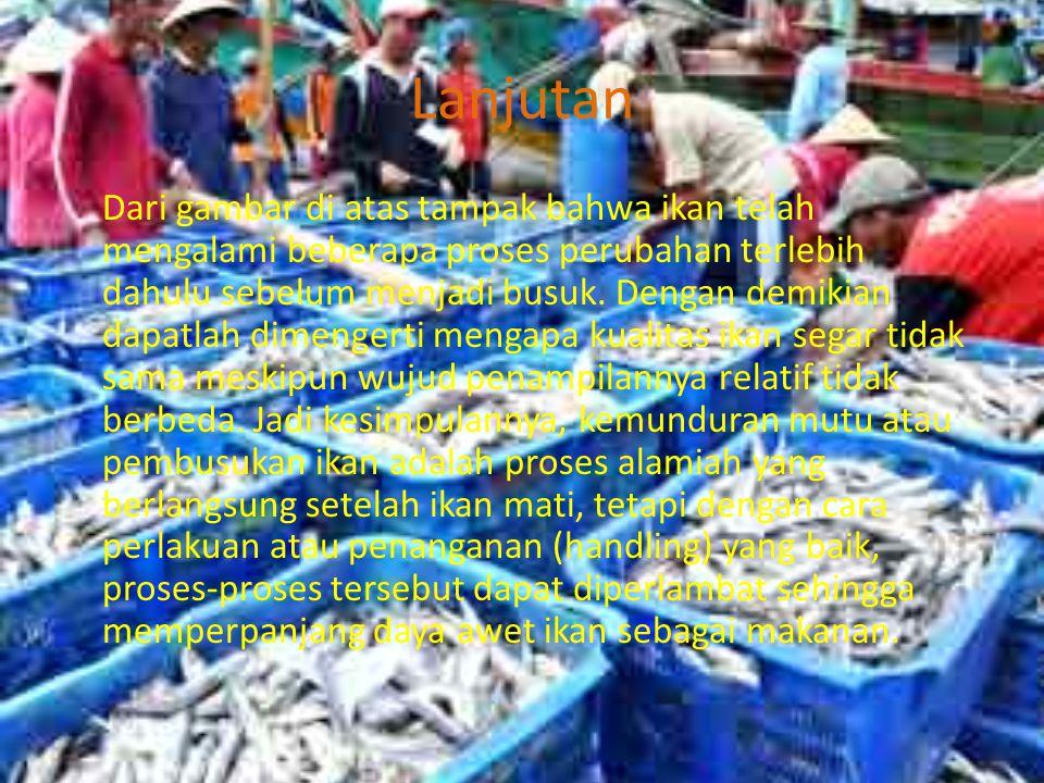 Lanjutan Dari gambar di atas tampak bahwa ikan telah mengalami beberapa proses perubahan terlebih dahulu sebelum menjadi busuk.