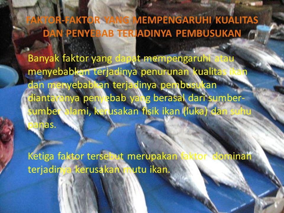 FAKTOR-FAKTOR YANG MEMPENGARUHI KUALITAS DAN PENYEBAB TERJADINYA PEMBUSUKAN Banyak faktor yang dapat mempengaruhi atau menyebabkan terjadinya penurunan kualitas ikan dan menyebabkan terjadinya pembusukan diantaranya penyebab yang berasal dari sumber- sumber alami, kerusakan fisik ikan (luka) dan suhu panas.