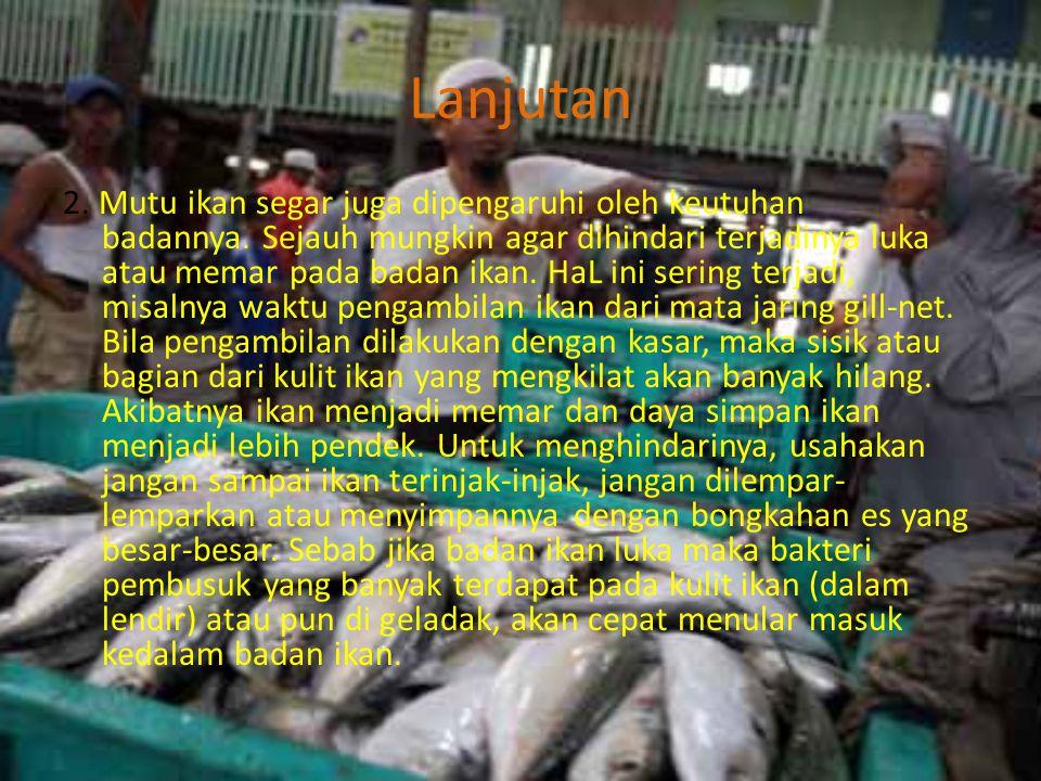 Lanjutan 2.Mutu ikan segar juga dipengaruhi oleh keutuhan badannya.